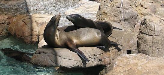 San Deigo Zoo Sea Lions Smooching