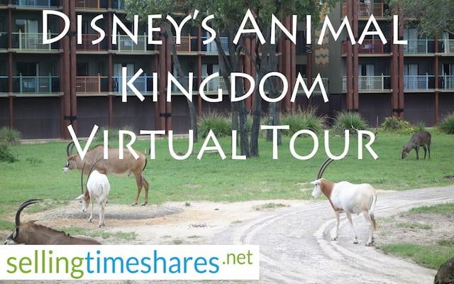 disneys animal kingdom thumbnail
