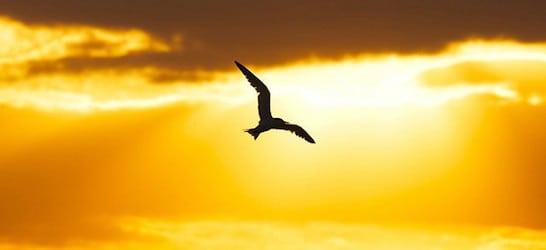 sanibel island bird in flight